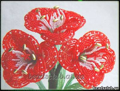 Амариллис красный (ближний