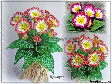 Примула- Первоцвет