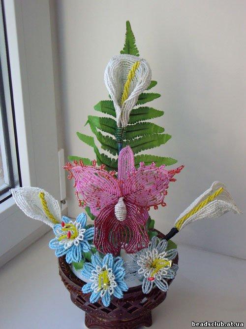 Орхидея Каттлея, каллы.
